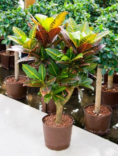 Hydrokultur pflanzen hydrokultur blumen wilheine hannover for Hydrokulturpflanzen shop