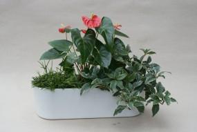 Flori Jardiniere 50/18/12 in versch. Farben (o. Pflanzen und Zubehör)
