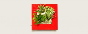 Flowerwall Pflanzenbild S 31x31 cm in verschiedenen Ausführungen
