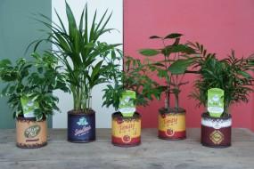 Keramikgefäß mit trendigen Druck komplett bepflanzt in verschiedenen Druck- und Pflanzvarianten