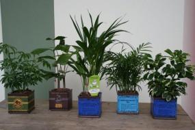 Trendiges Keramikgefäß Tea komplett bepflanzt in verschiedenen Varianten