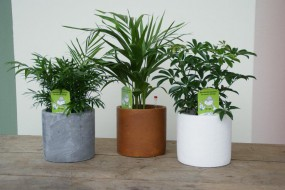 Keramikgefäß komplett bepflanzt in verschiedenen Varianten und Keramikfarben