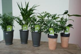 Keramikvase komplett bepflanzt in verschiedenen Farben und Pflanzvarianten