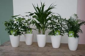 Keramikvase Ø13 / Höhe 17 in verschiedenen Farben komplett bepflanzt in verschiedenen Pflanzvariante