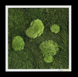 Wald und Kuglemoosbild 35x35 cm mit Befestigungsmaterial