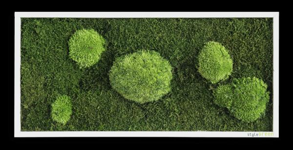 Wald und Kugelmoosbild 57x27 cm mit Befestigungsmaterial