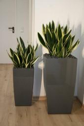 2 Stück Cubico Phoenix Kunststoffgefäße bepflanzt