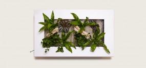 Flowerwall Pflanzenbild M 58x37x8 cm in verschiedenen Ausführungen
