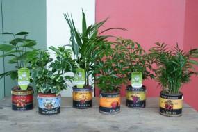 Keramikgefäß veggie komplett bepflanzt in verschiedenen Druck- und Pflanzvarianten